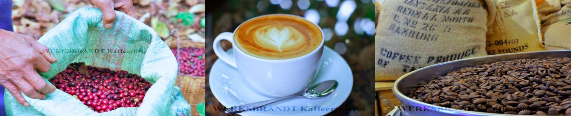 WERKSBRANDT Kaffeerösterei Impressionen Kaffeekirschen im Sack Latteart Kaffee im Kühlsieb