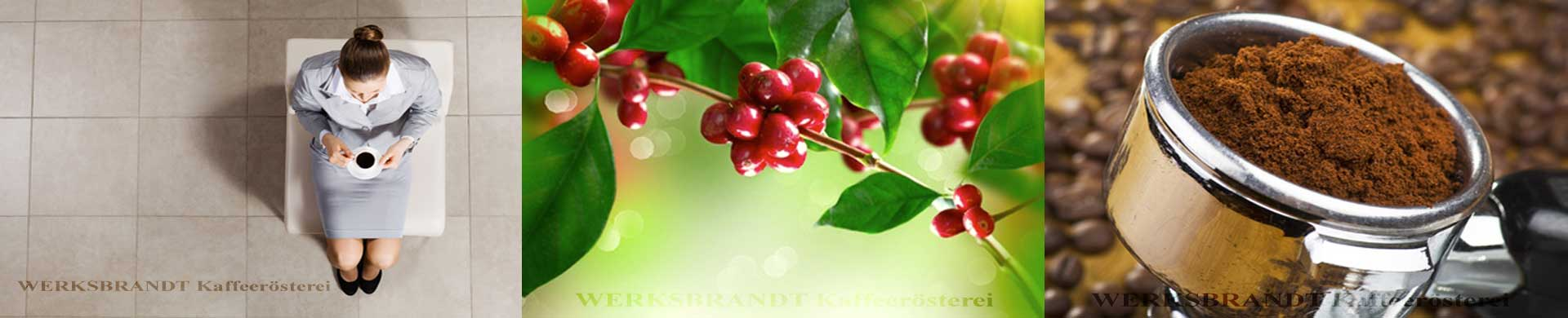 WERKSBRANDT Kaffeerösterei Impressionen Kaffee im Warteraum Kaffeekirsche Siebträger